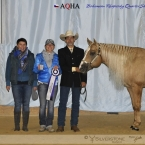 Great Little Step - Grand Champion Stallions